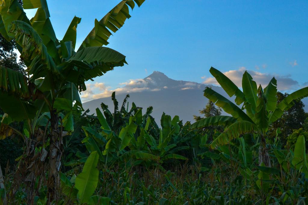 banana-trees-under-clear-sky-2063892.jpg